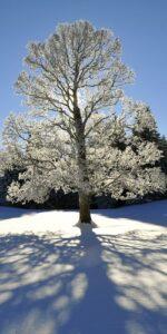 Jura im Winter